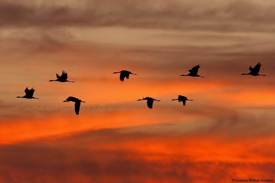 Скачать минус песни журавль по небу летит